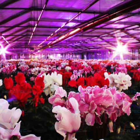 Lichtillumination für Gartencenter