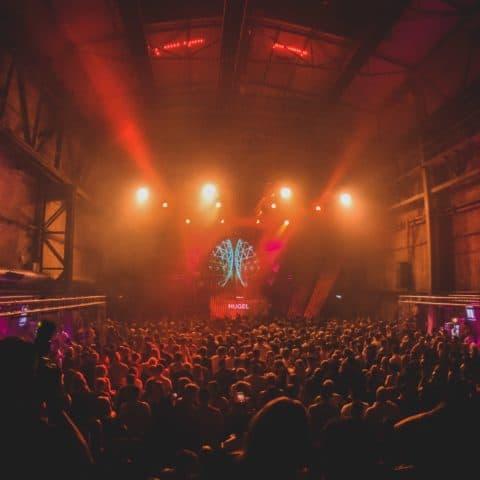 Pioneer_DJ_Alpha_Crowd_Light.jpg